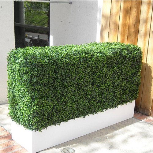 Hedge Box